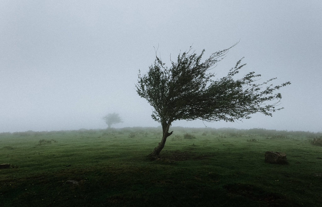 Jennifer – The Winds of Spring