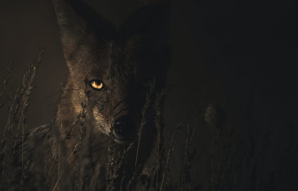 Luz de Maria – The Wolves are Hungry