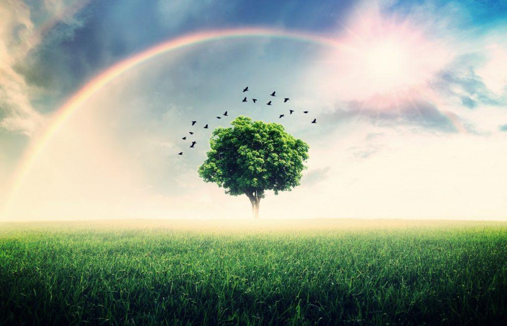 Gisella Cardia – New Heavens and a New Earth